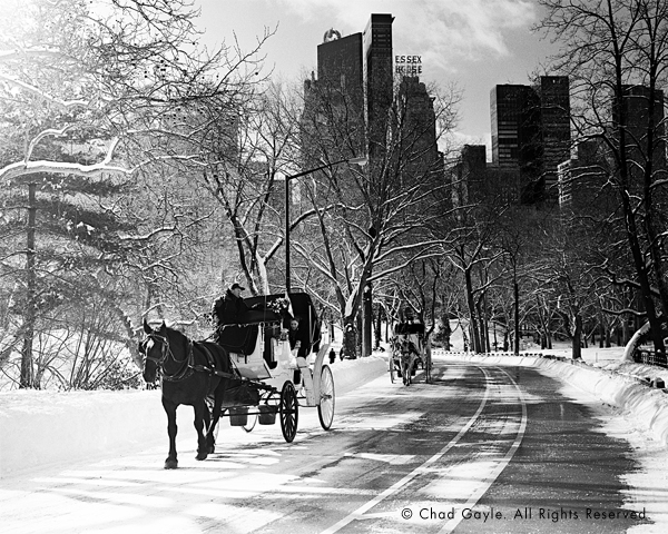 Carriages in Central Park in winter